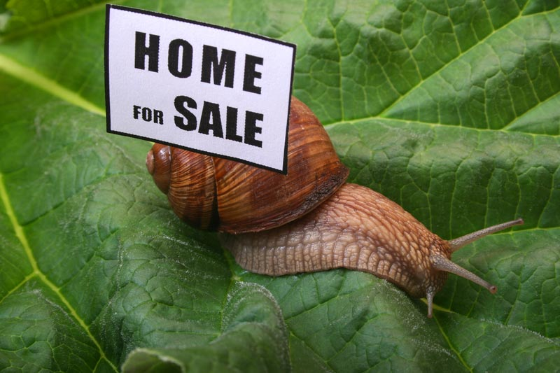 Slow snail with home for sale sign